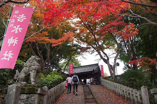 20161120yoshino09